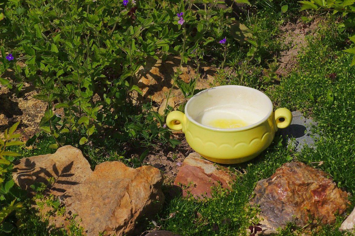 Hemp oil milk